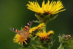 Economic value of butterflies